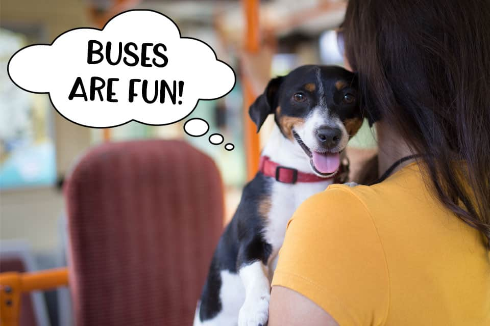 Dog on a bus with his owner