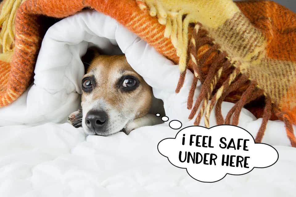 Small dog hiding under the duvet