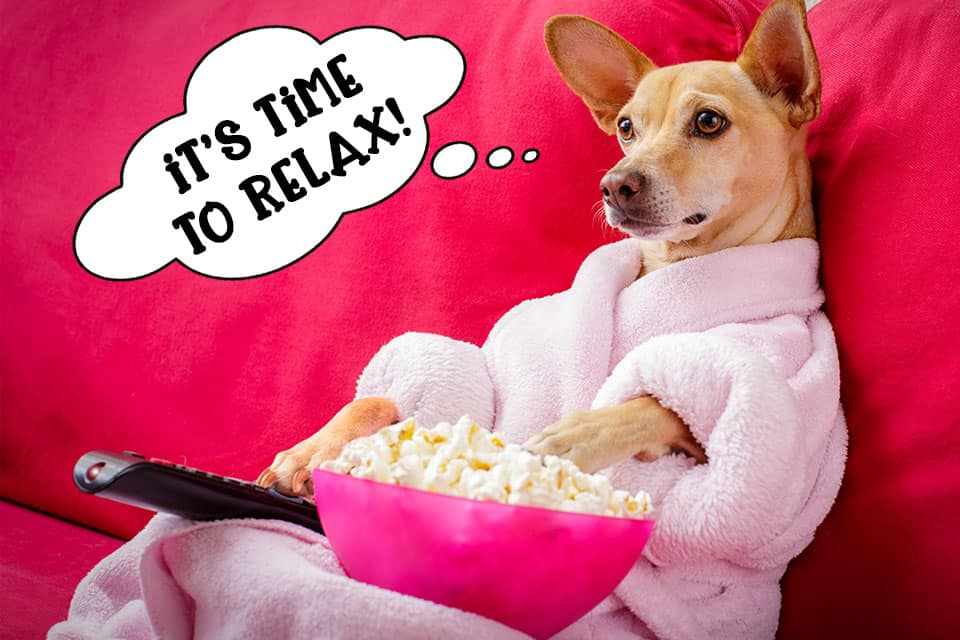 Dog watching TV with popcorn