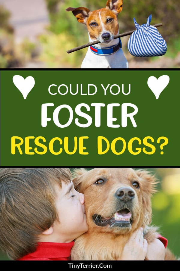 10 Incredible Reasons to Foster Rescue Dogs