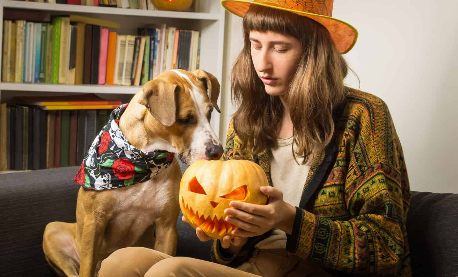 10 Halloween dog movies to watch with your dog