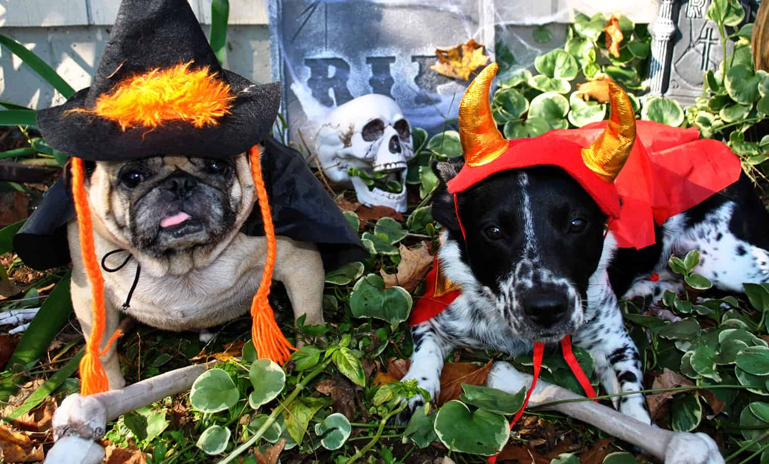 Top Tips to Keep Your Dog Safe at Halloween