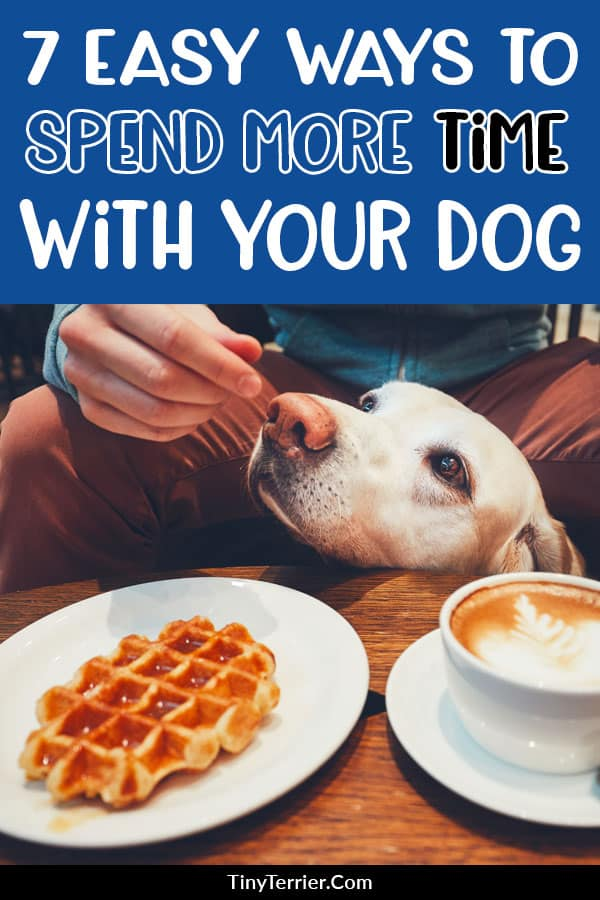 How to spend more time with your dog. Boost your dog's love for you by spending more time with them with these dog owner hacks. Do you ever feel like you don't spend enough time with your dog? If so, here are seven simple ways to spend more time with your beloved pet. #petownerhacks #dogowner #dogs