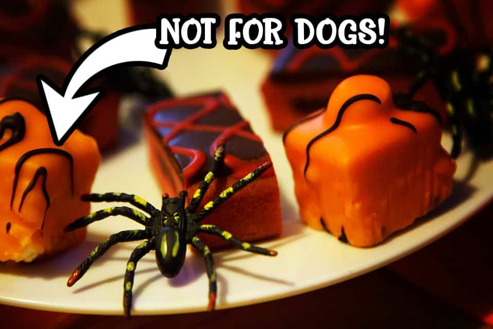 No chocolate for dogs this Halloween