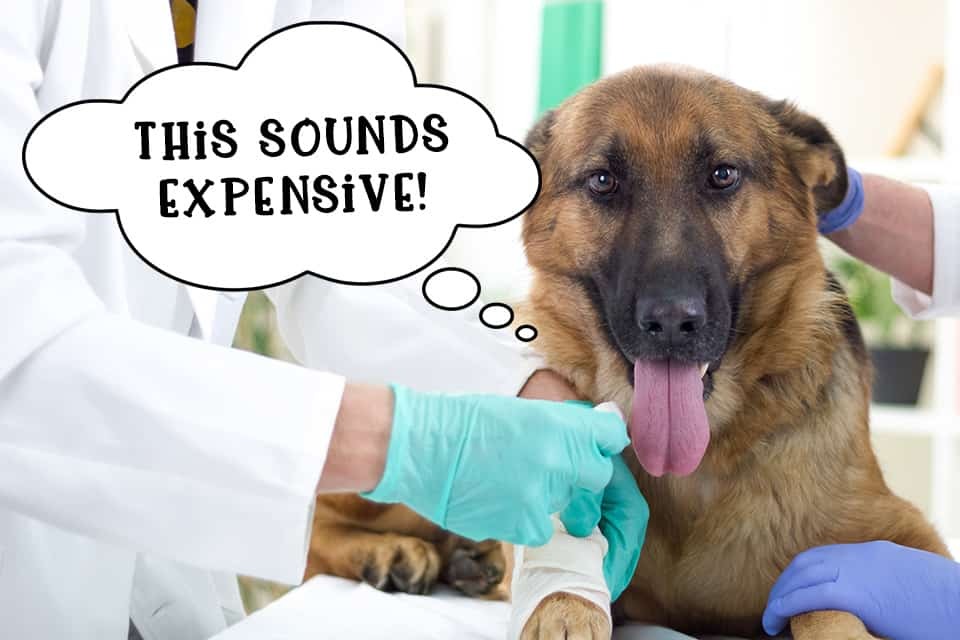Dog being treated by the vet