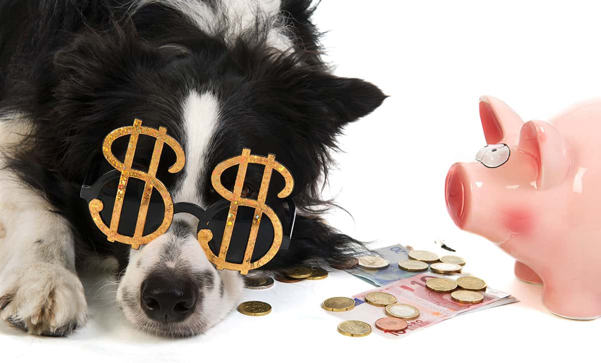 Can you Afford a Dog? Discover 14 Hidden Costs When Getting a New Dog