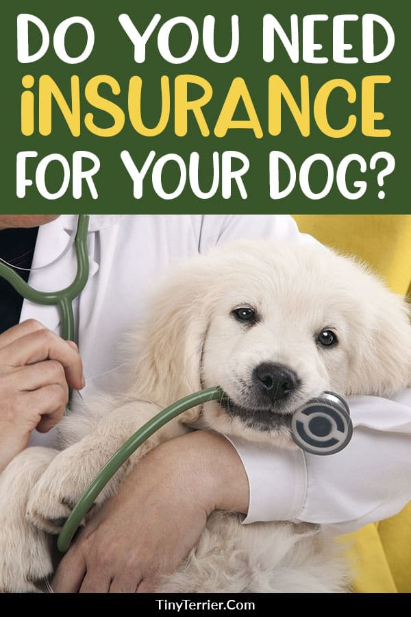 Should you buy pet insurance for your dog? Find out why pet insurance is so important, and an alternative to pet insurance that still keeps your dog protected.