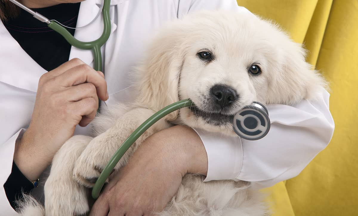 Should you buy pet insurance for your dog?