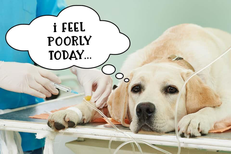 Sick dog at vets