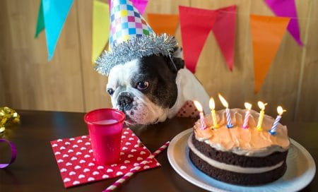 The Best Pupcake Recipes for Dog Birthday Cakes